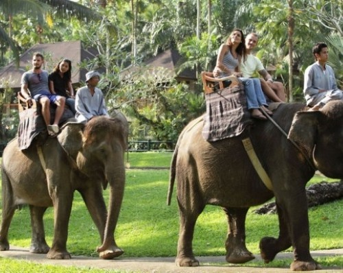 elephant-ride-bali-tour-package-bali-tour-organizer