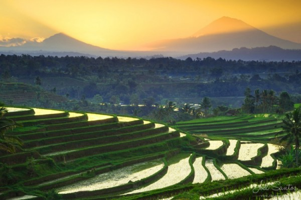 Image Result For Bali Local Tour Packages