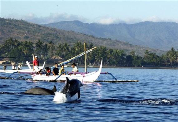 lovina-dolphin-bali-tour-package-bali-tour-organizer