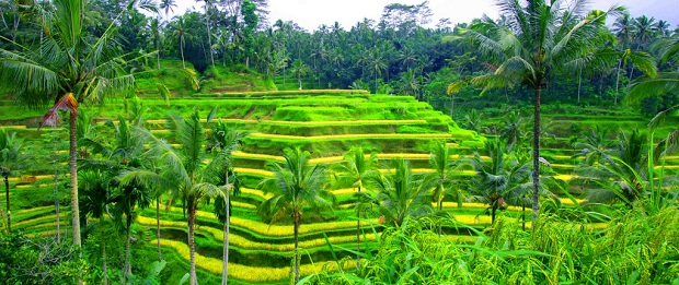 tegalalang-rice-field-bali-tour-package