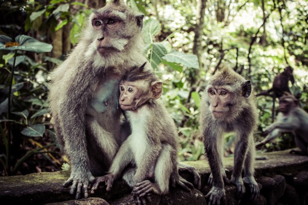 monkey-forest-bali-tour-package-bali-tour-organizer